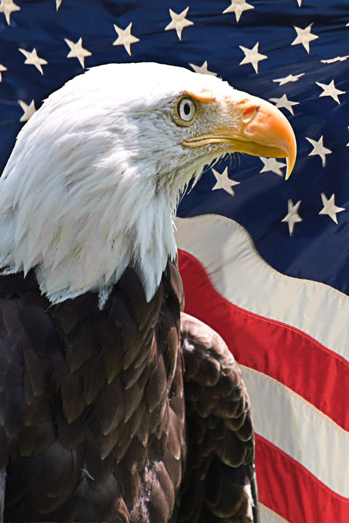 Eagle head with USA Flag v1